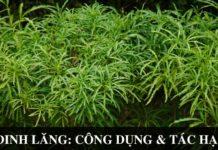 Dinh lang Cong dung va tac hai nhu the nao voi suc khoe